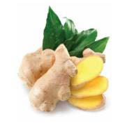 doTERRA Essential Oils  - Ginger