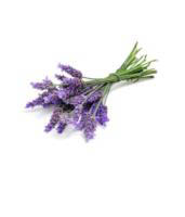 do TERRA Essential Oils - Lavender 15ml