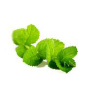 doTERRA Essential Oils - Peppermint 15ml