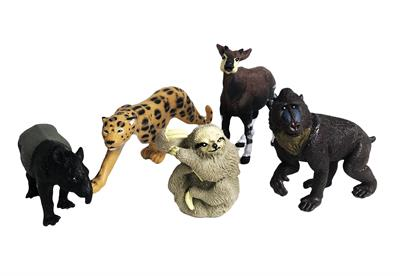 Rainforest Animal Collection